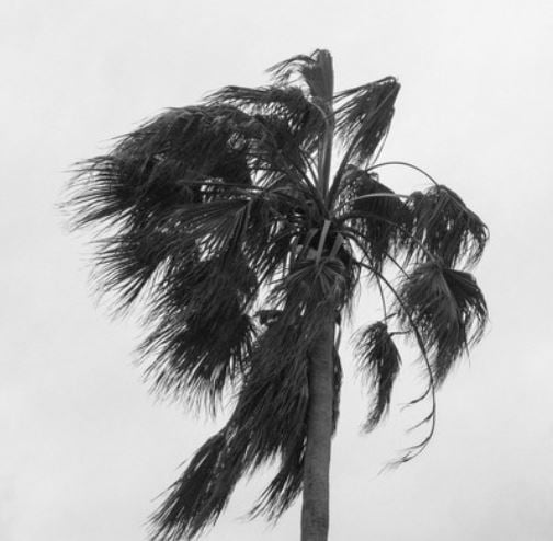 Palm Tree on South Padre Island - Dik D Myers Photography